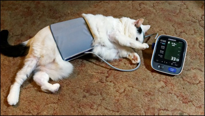 photo credit: How To Take Your Cat's Blood Pressure