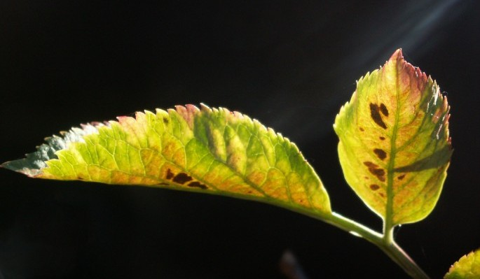 photo credit: Leaves and light III